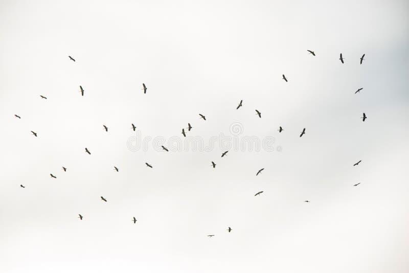 Стада летать птиц стоковое фото rf