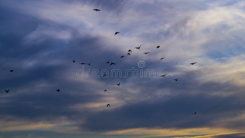 Стада летая птиц в небе стоковое изображение