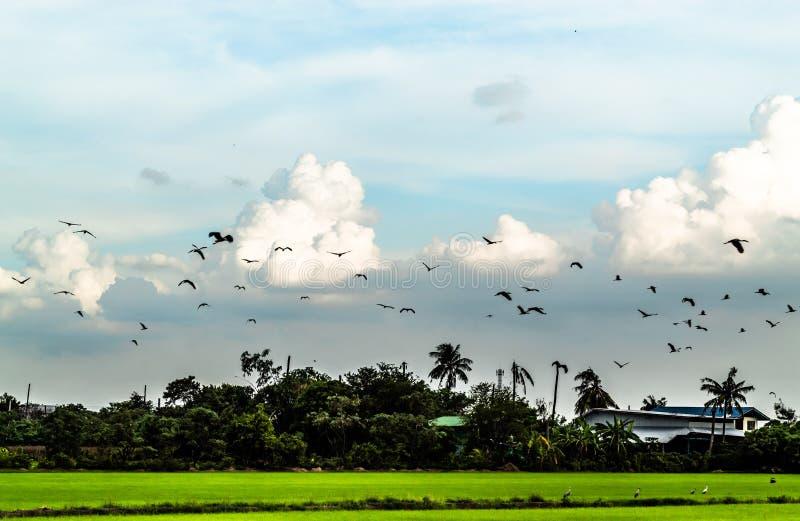 Стада птиц летая в небо стоковое изображение