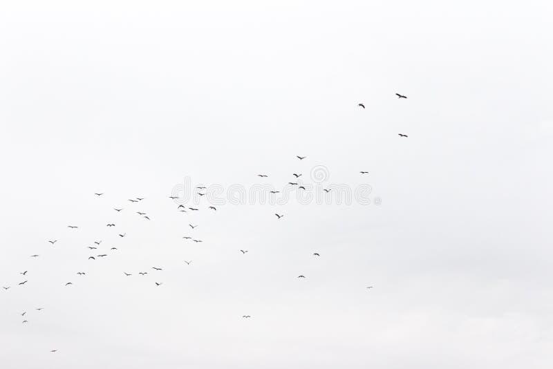 Стада птиц стоковая фотография