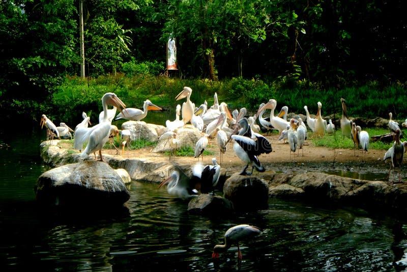 Стадо белых птиц 2 стоковая фотография rf