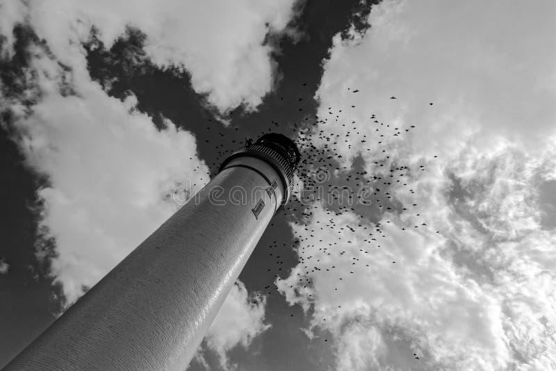 Стадо галок вокруг маяка стоковые фотографии rf