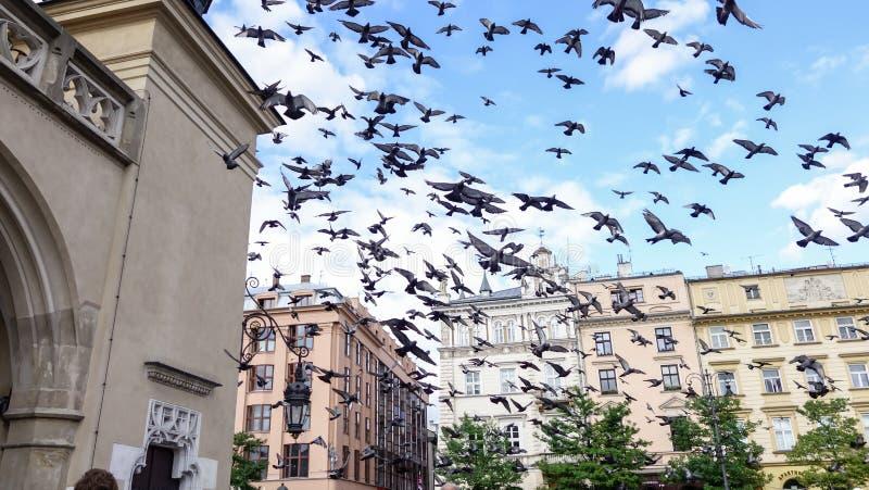 Стадо голубей в полете, Праги, чехии стоковое изображение rf