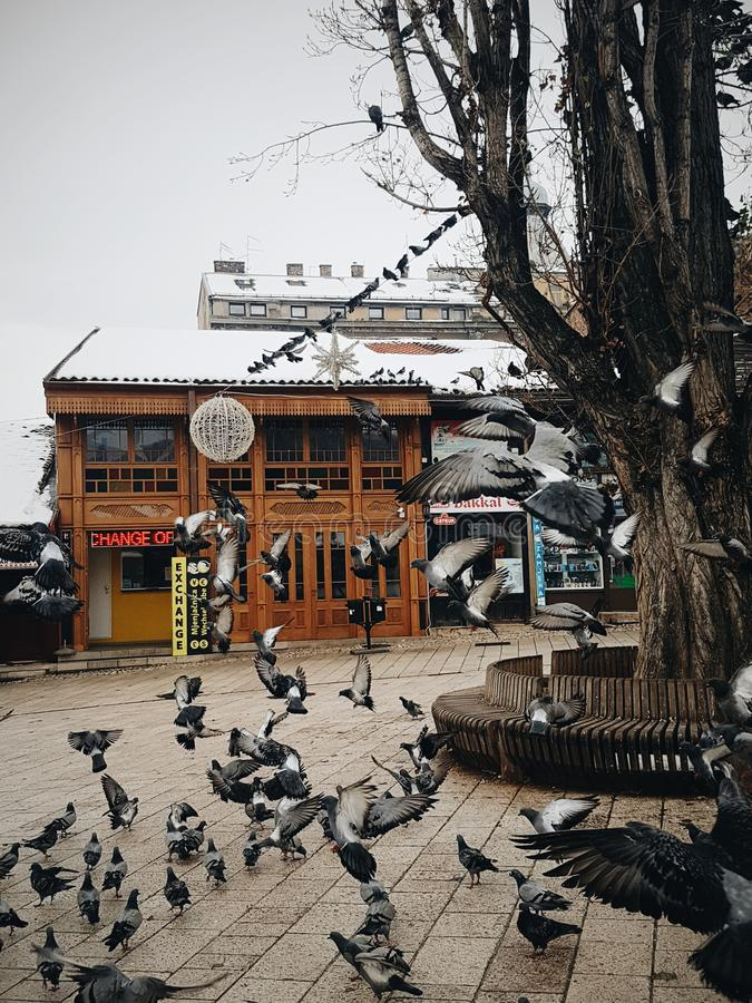 Стадо голубей летая вокруг стоковая фотография rf