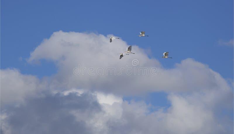 Стадо летая птиц стоковая фотография