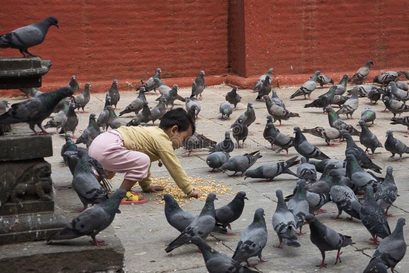 Стадо мальчика питаясь голубей стоковые фотографии rf