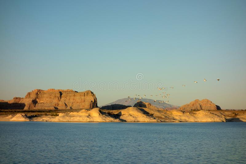 Стадо пеликанов летая над озером Пауэлл в летнем времени стоковые фото