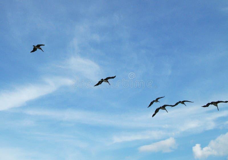 Стадо птиц в небе стоковая фотография rf