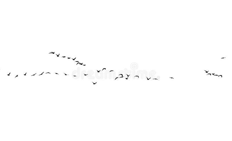 Стадо птиц на белой предпосылке иллюстрация штока