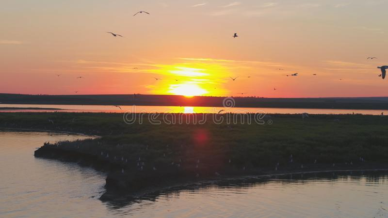 Стадо птиц на предпосылке красочного неба Заход солнца на реке Остров чаек Птицы летают на заход солнца, воздушный стоковое фото