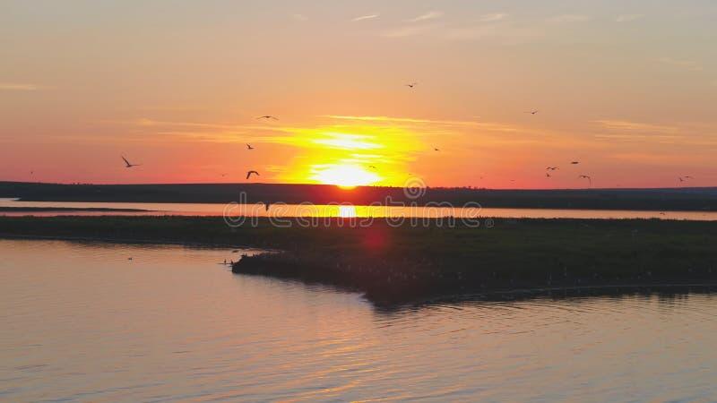 Стадо птиц на предпосылке красочного неба Заход солнца на реке Остров чаек Птицы летают на заход солнца, воздушный стоковая фотография