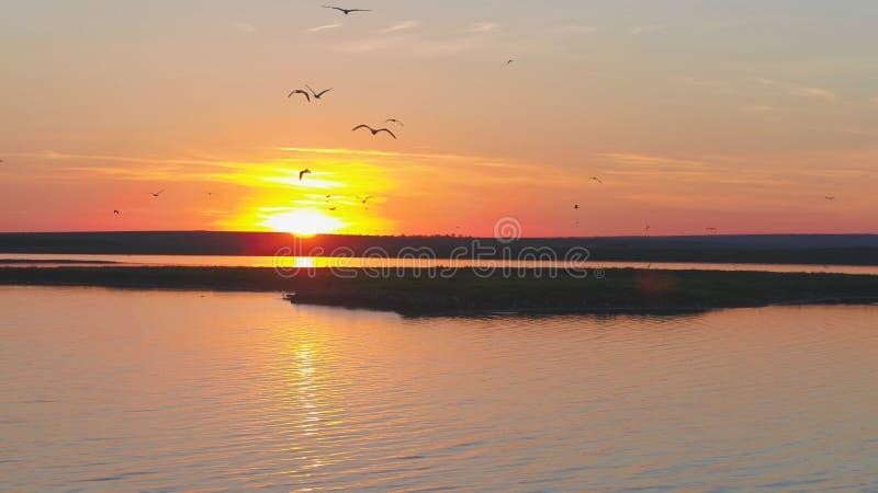 Стадо птиц на предпосылке красочного неба Заход солнца на реке Остров чаек Птицы летают на заход солнца, воздушный стоковые изображения