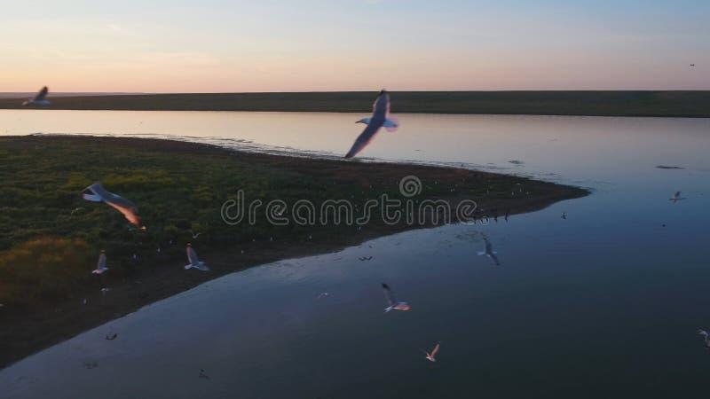 Стадо птиц на предпосылке красочного неба Заход солнца на реке Остров чаек Птицы летают на заход солнца, воздушный стоковое фото rf