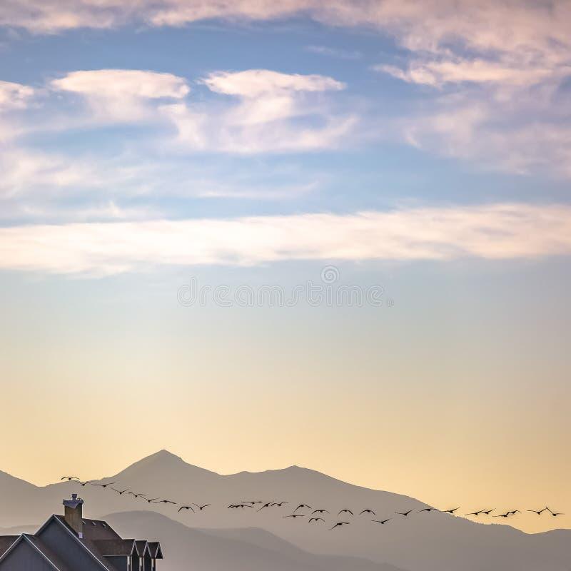 Стадо птиц против горы и красивого неба стоковые изображения rf