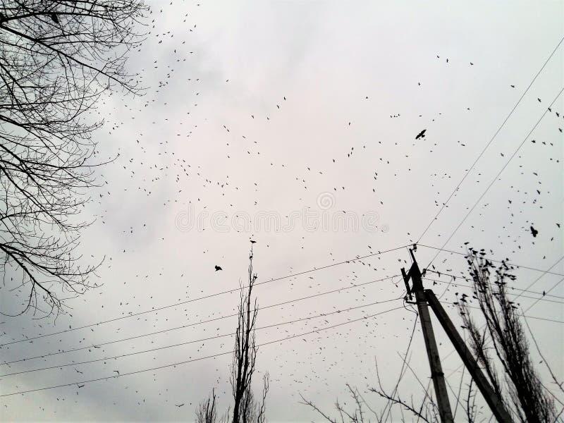 Стадо черных птиц в небе overcast стоковые изображения rf