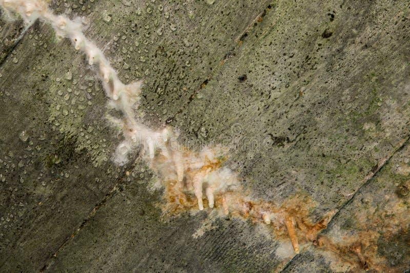 Сталактит на бункерах Первая мировой войны бетона внутренних в Вердене стоковое изображение rf