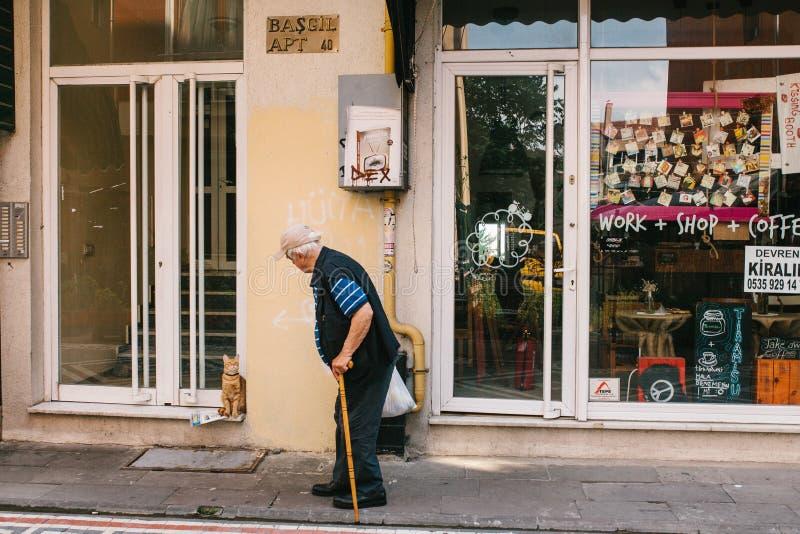 Стамбул, 14-ое июня 2017: Домашняя кошка встречает предпринимателя пожилого человека которому возвращает с приобретениями от мага стоковая фотография