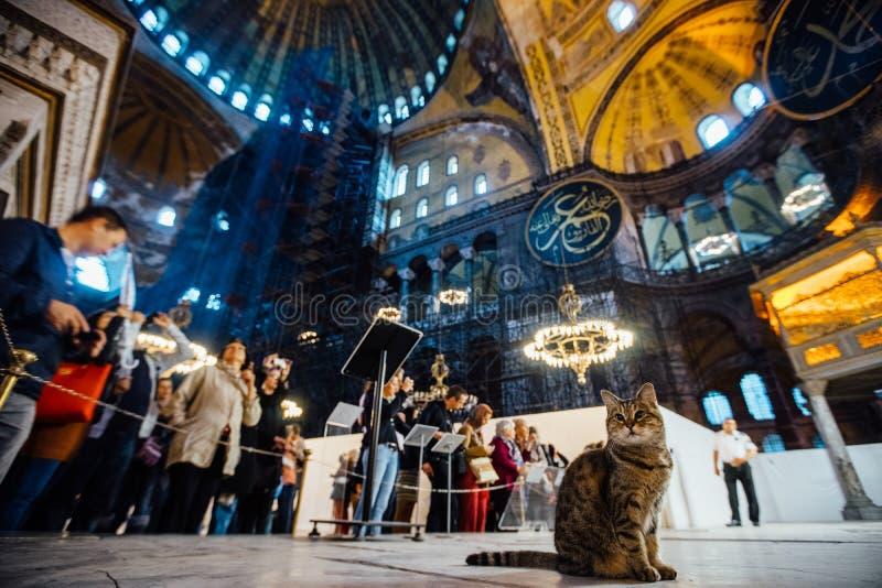 Стамбул, Турция - 11-ое октября 2015: кот на предпосылке туристов внутри музея Hagia Sophia стоковое фото