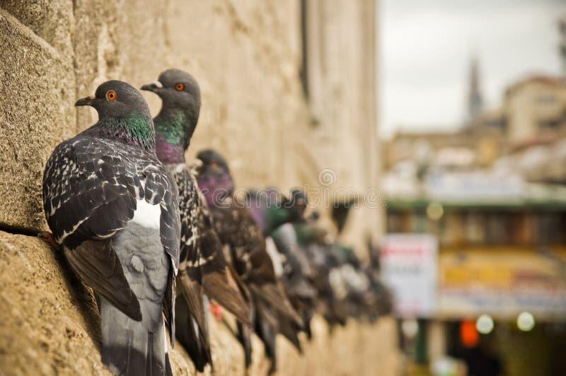 Стамбул стоковое фото rf