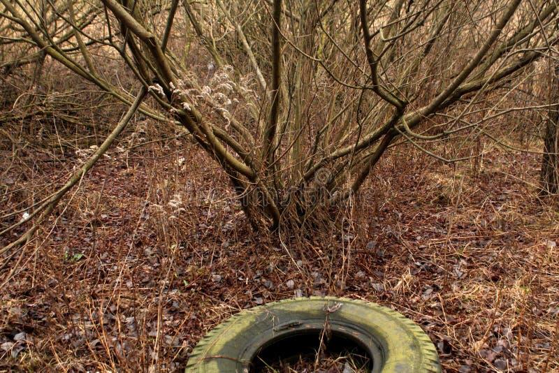 Старая автошина в древесине стоковое изображение