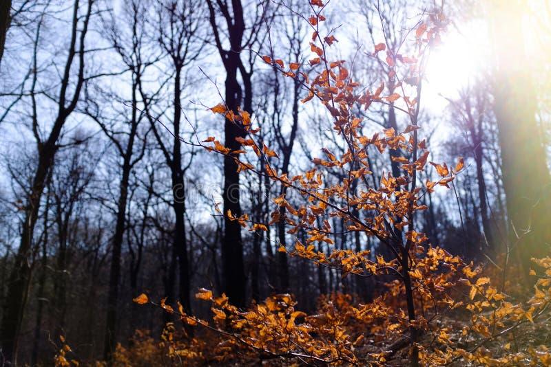 Старая ветвь дерева в зиме стоковое фото