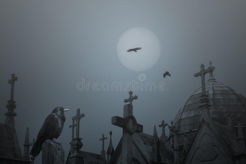 Старая ворона кладбища стоковая фотография rf