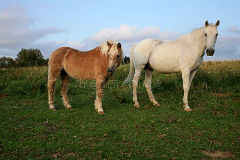 2, старая, выбытая лошадь на луге стоковое изображение rf