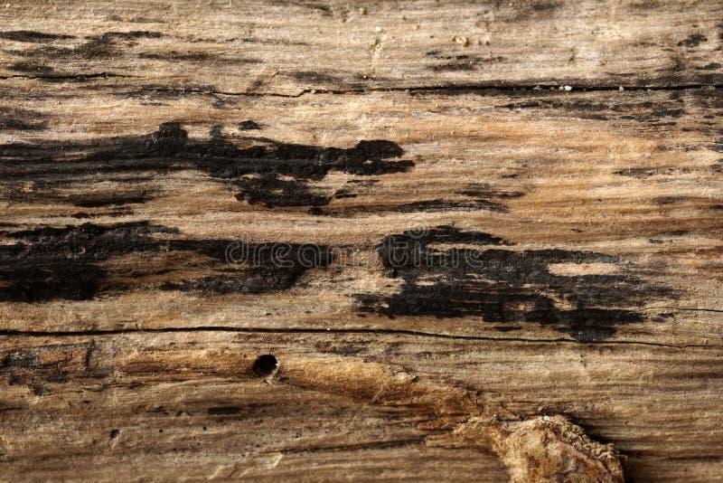Старая выдержанная древесина и grunge стоковая фотография rf