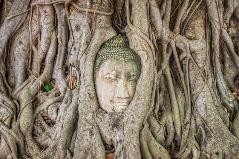 Старая голова статуи изображения Будды врезанная в корнях баньяна стоковое изображение