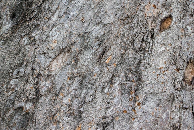 Старая деревенская деревянная кожа стоковые фотографии rf