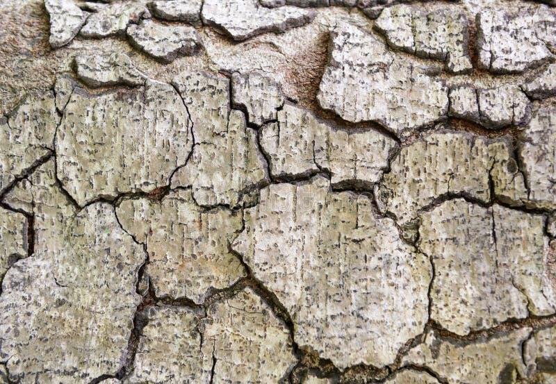 Старая деревянная картина предпосылки текстуры дерева стоковые фото