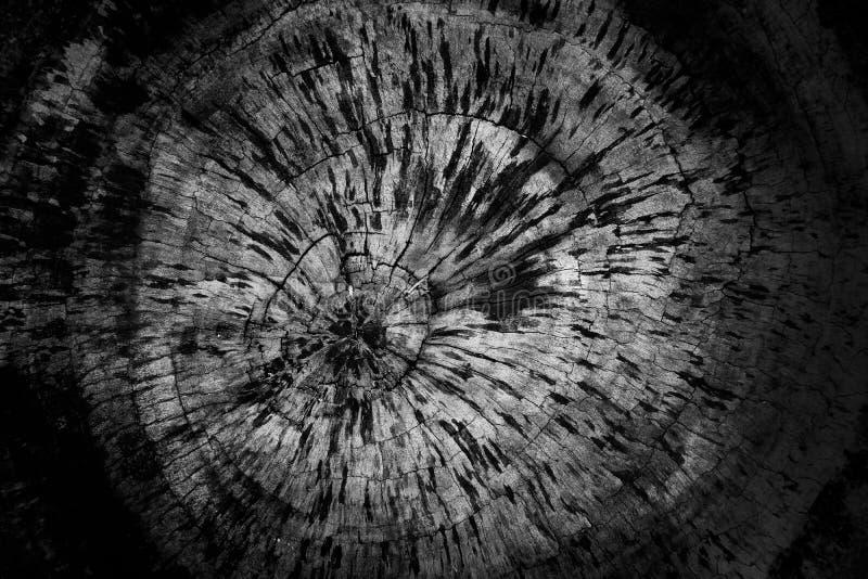 Старая деревянная предпосылка текстуры колец дерева предпосылки текстуры старая деревянная стоковые изображения rf