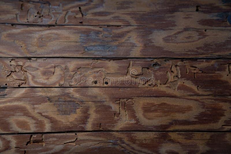 Старая деревянная предпосылка текстуры - старая конфигурация пучка излучения стоковое фото