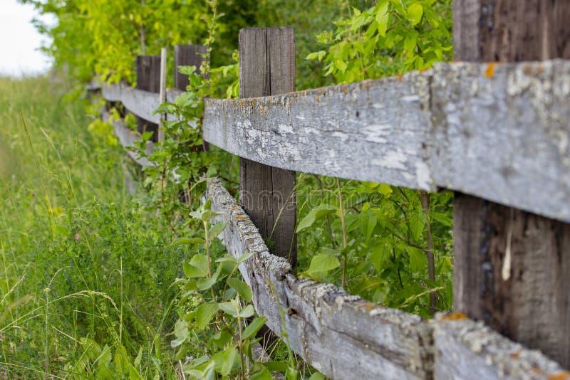 Старая деревянная сельская загородка, необработанная древесина с трассировками старея грибка и мох Планки загородки Wattle деревя стоковые изображения rf