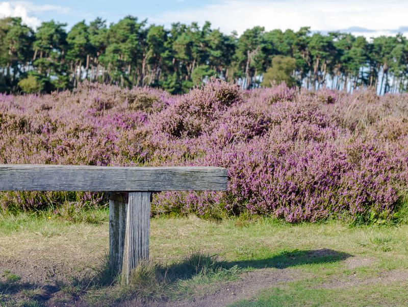 Старая деревянная скамья в veluwe hoge, приглашая для того чтобы иметь остатки стоковая фотография
