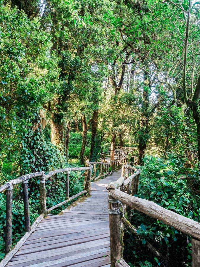 Старая дорожка деревянного моста в вечнозеленые джунгли стоковые фото