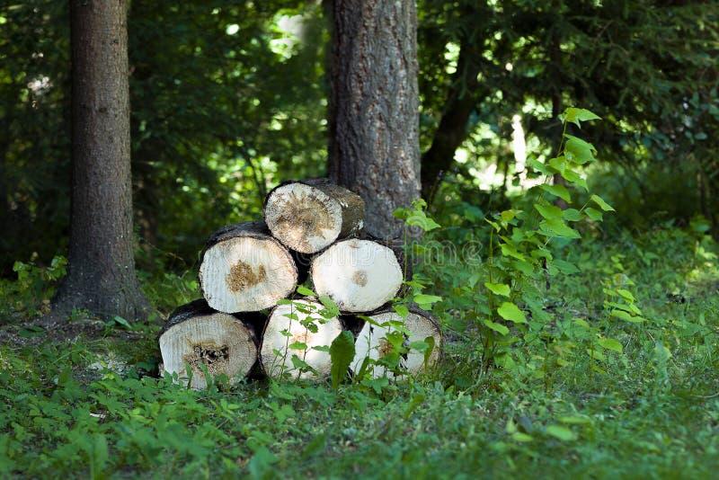 Старая древесина спилила в несколько частей стоковые изображения