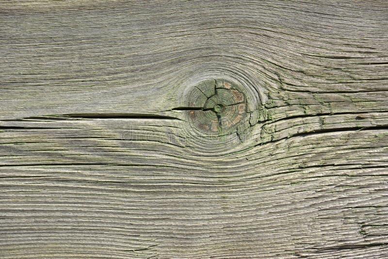 Старая древесина с узлом и трассировками зеленой краски стоковые изображения rf