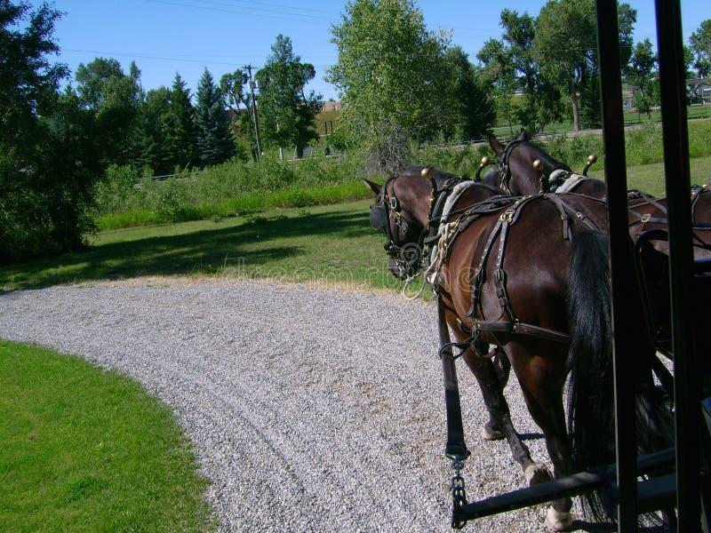 Старая езда тренера стоковое изображение rf