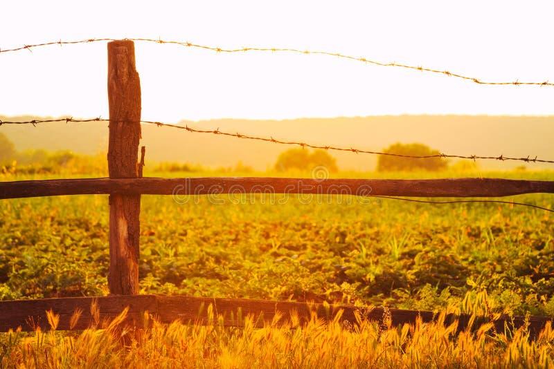 Старая деревянная загородка с колючей проволокой против солнца стоковое изображение rf