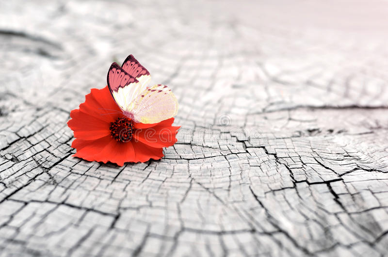 Старая деревянная предпосылка с космосом экземпляра Цветок и бабочка стоковое изображение rf