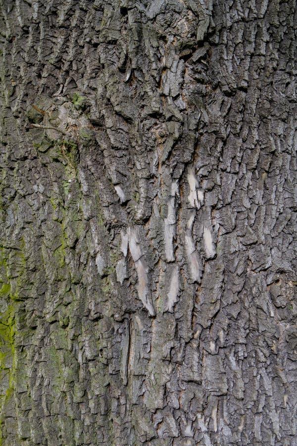 Download Старая деревянная предпосылка текстуры дерева Стоковое Изображение - изображение насчитывающей темно, текстура: 40583693