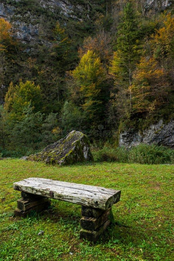 Старая деревянная скамья в зеленом луге стоковая фотография rf