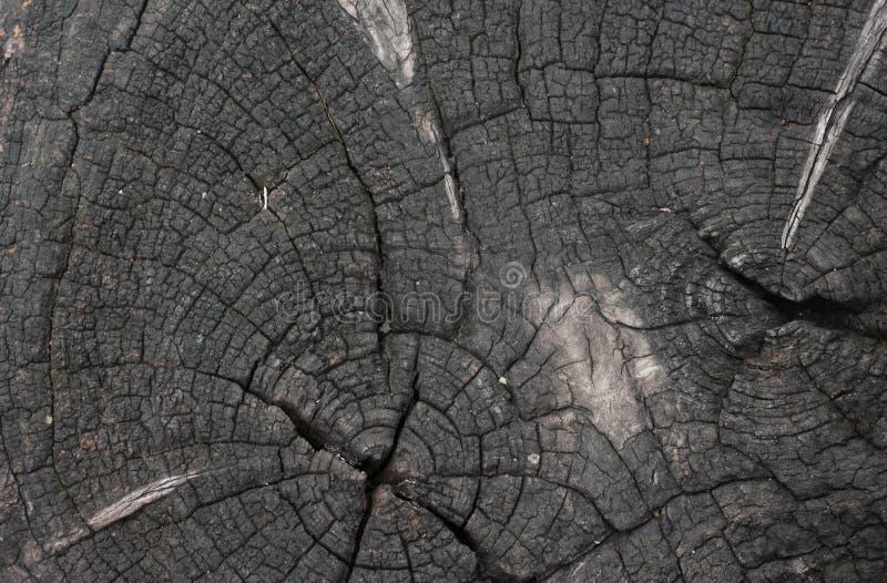 Старая деревянная текстура высушенный стоковая фотография