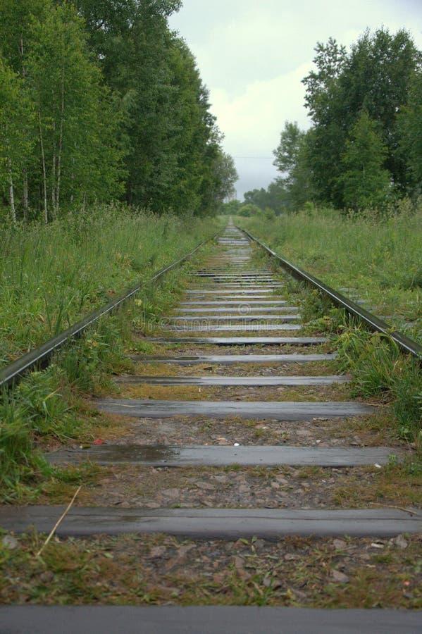 Старая железная дорога через лес перерастанный с травой E стоковые изображения rf