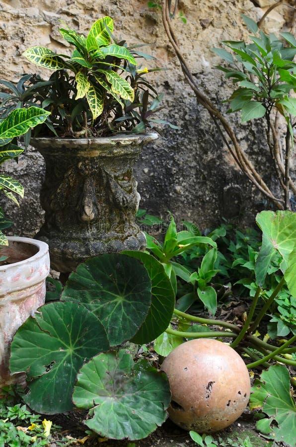 Старая каменная ваза с зелеными растениями в саде с украшением стоковое изображение rf