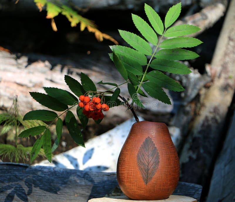 Старая керамическая ваза с ветвью рябины стоковая фотография