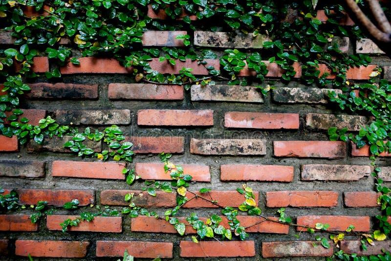 Старая кирпичная стена текстуры, предпосылка стоковые фотографии rf