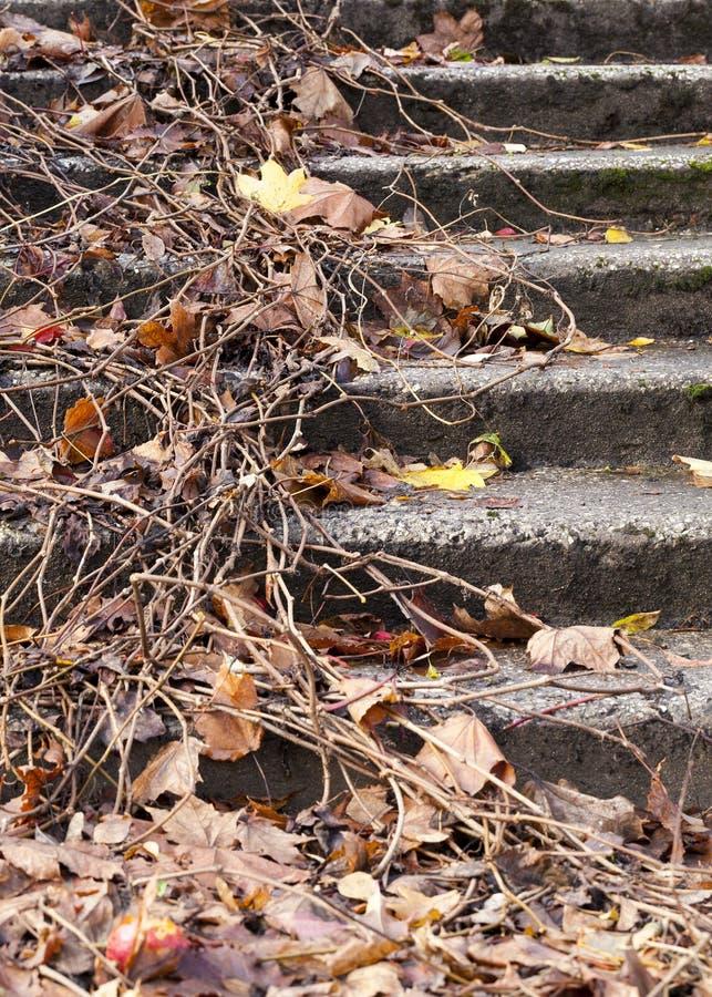 Старая конкретная лестница стоковая фотография rf
