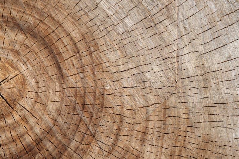 Старая обработанная резанием поверхность дуба стоковая фотография